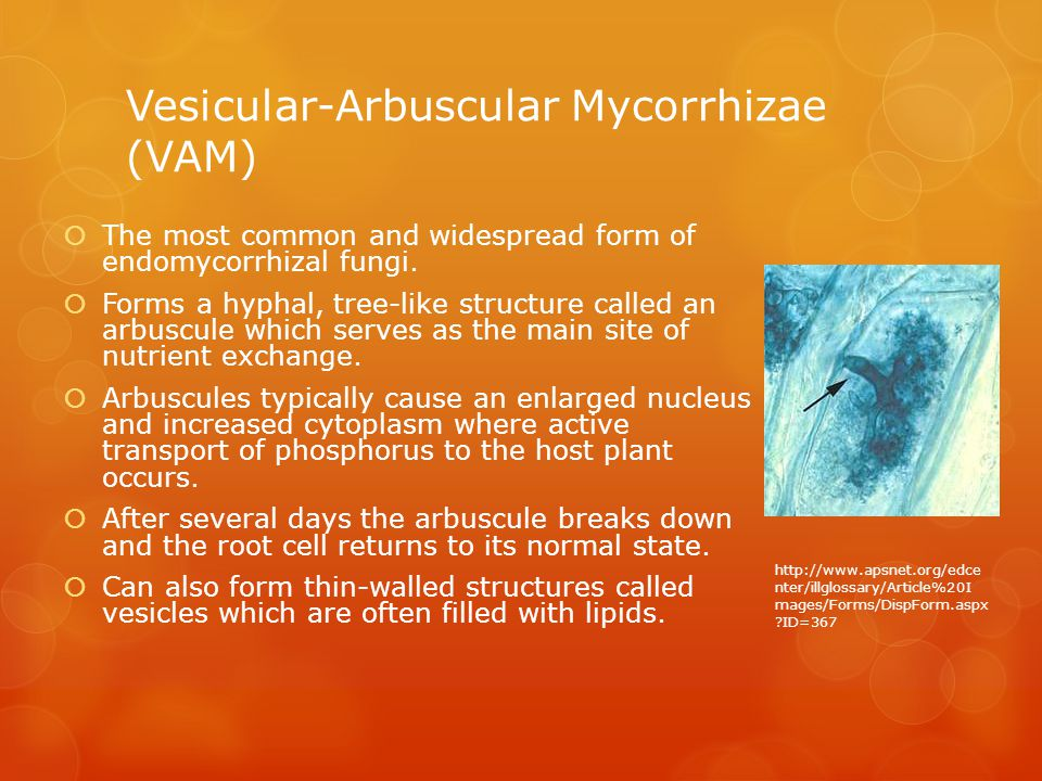 Vesicular-Arbuscular Mycorrhizae (VAM)