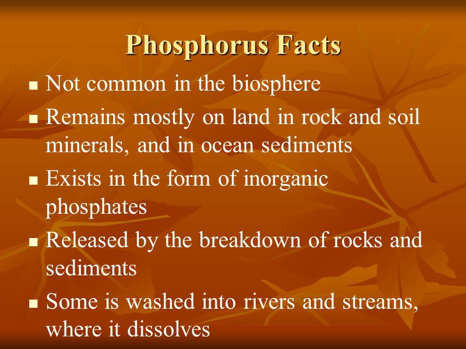 Phosphorus Facts Not common in the biosphere