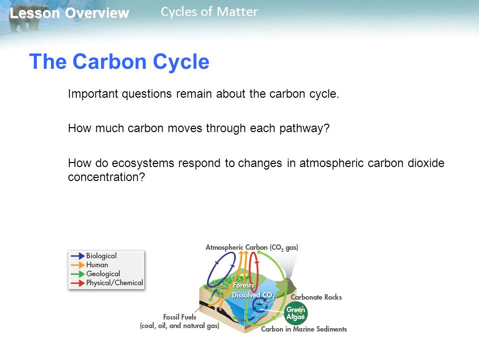 The Carbon Cycle Important questions remain about the carbon cycle.