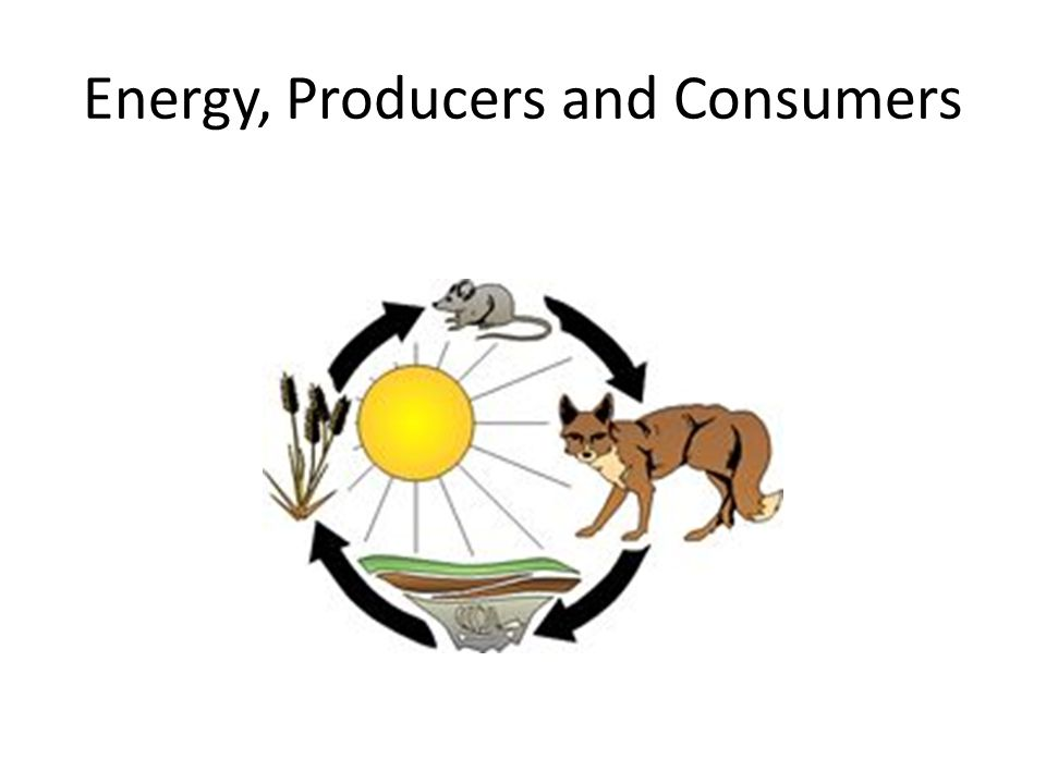 Energy, Producers and Consumers
