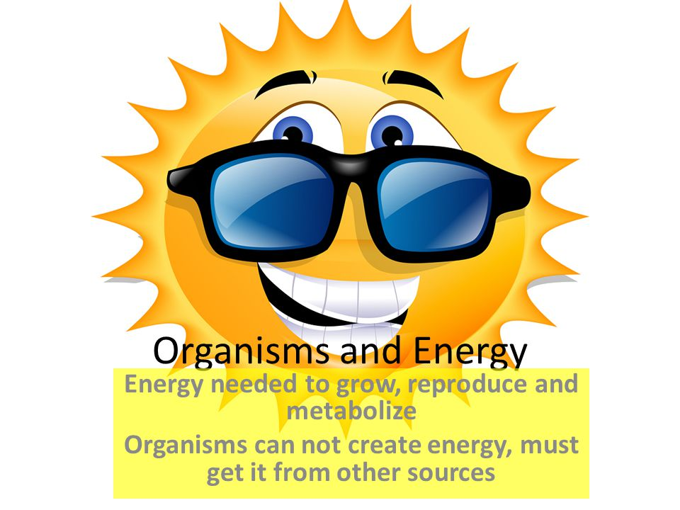 Organisms and Energy Energy needed to grow, reproduce and metabolize