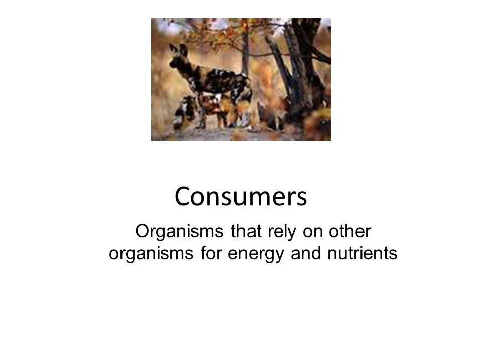 Organisms that rely on other organisms for energy and nutrients