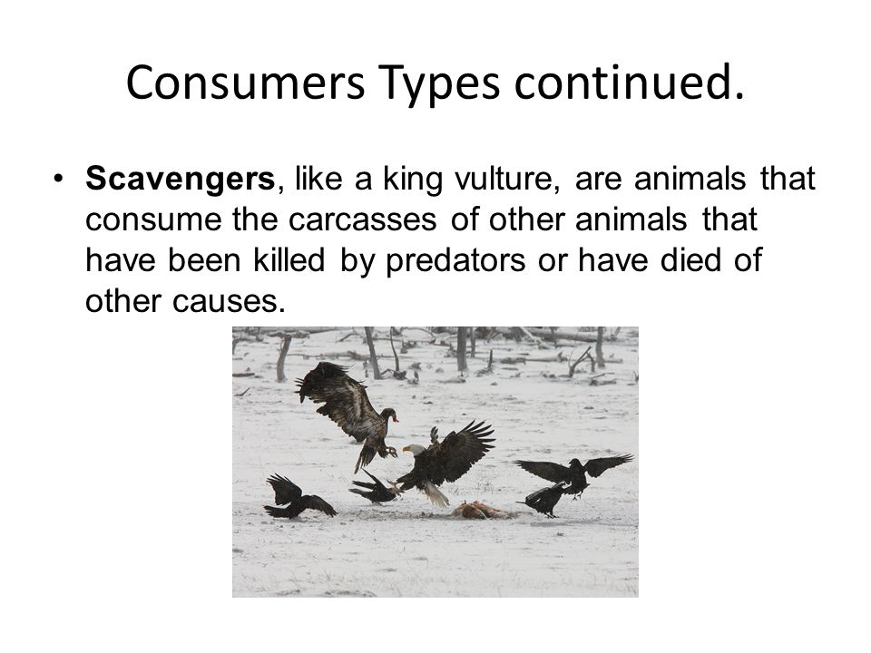 Consumers Types continued.