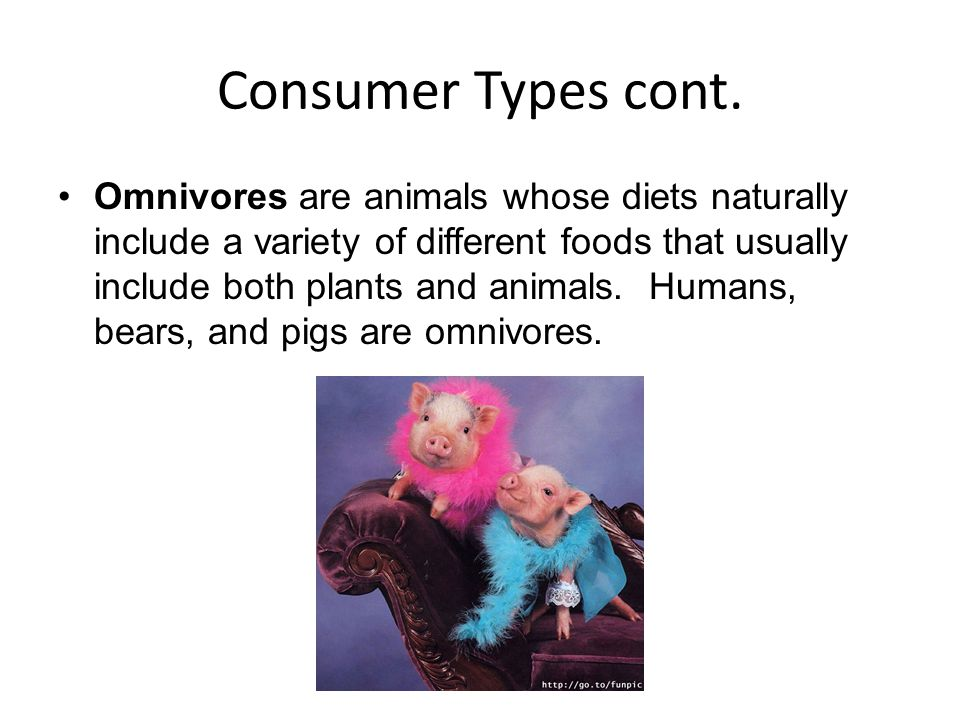 Consumer Types cont.