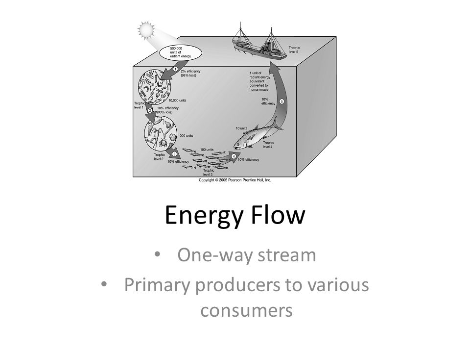 One-way stream Primary producers to various consumers