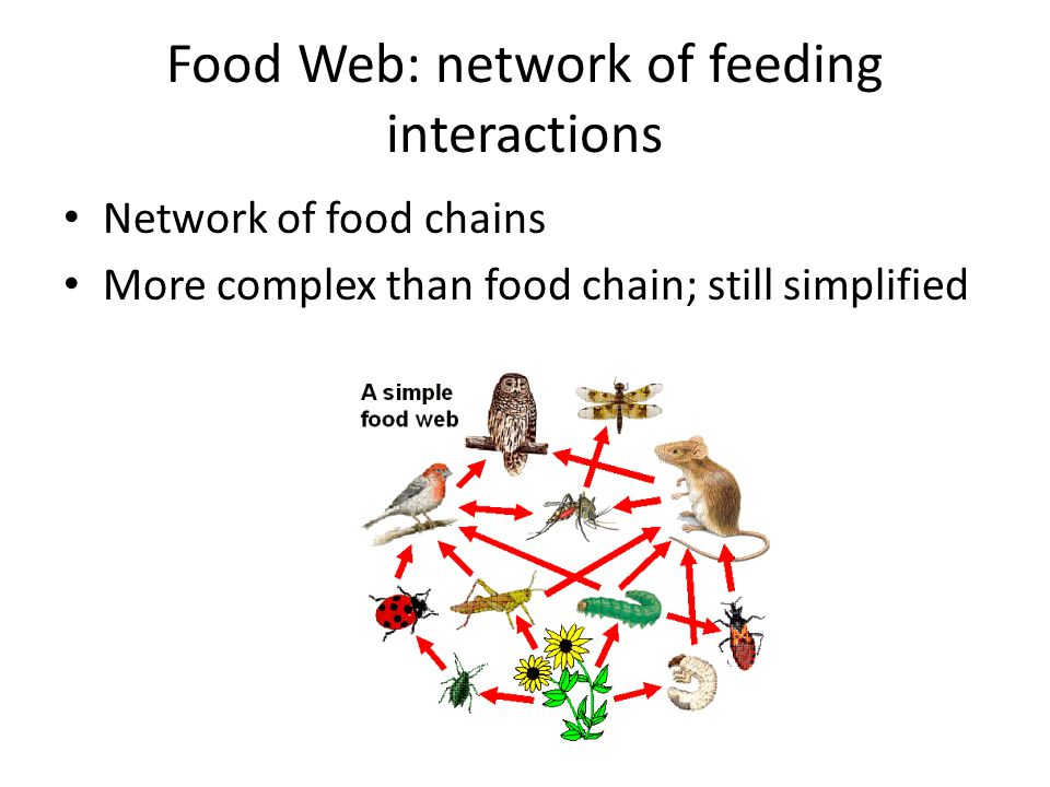 Food Web: network of feeding interactions