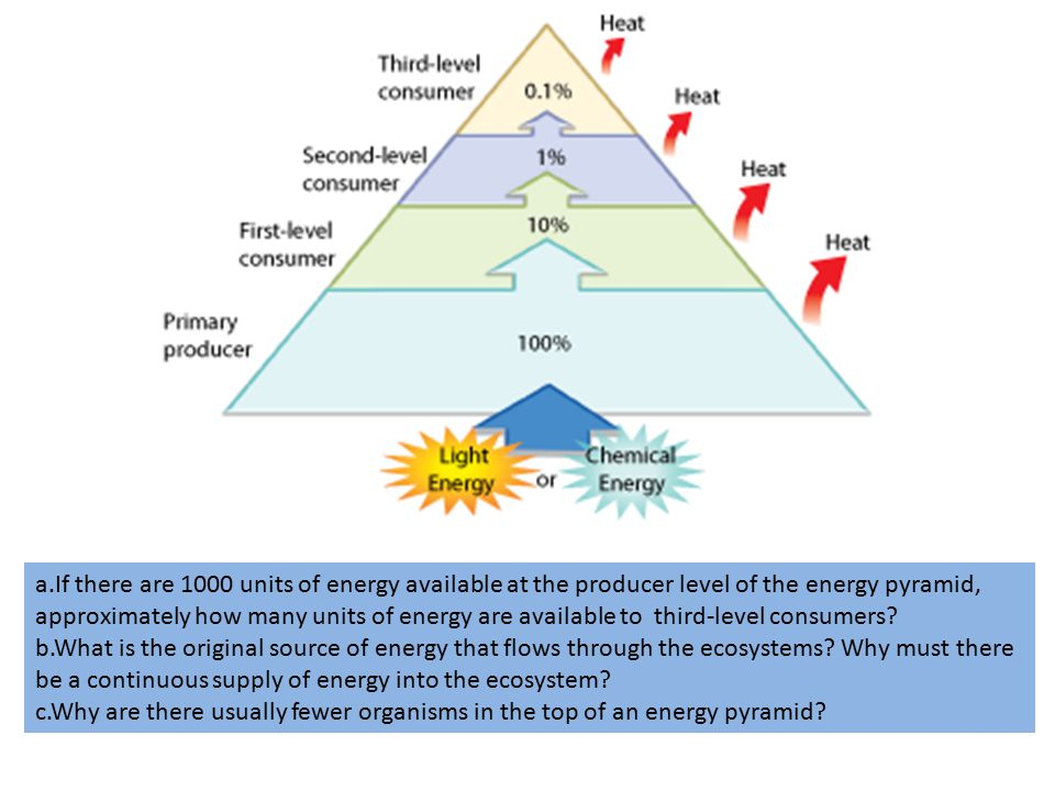 a.If there are 1000 units of energy available at the producer level of the energy pyramid, approximately how many units of energy are available to third-level consumers