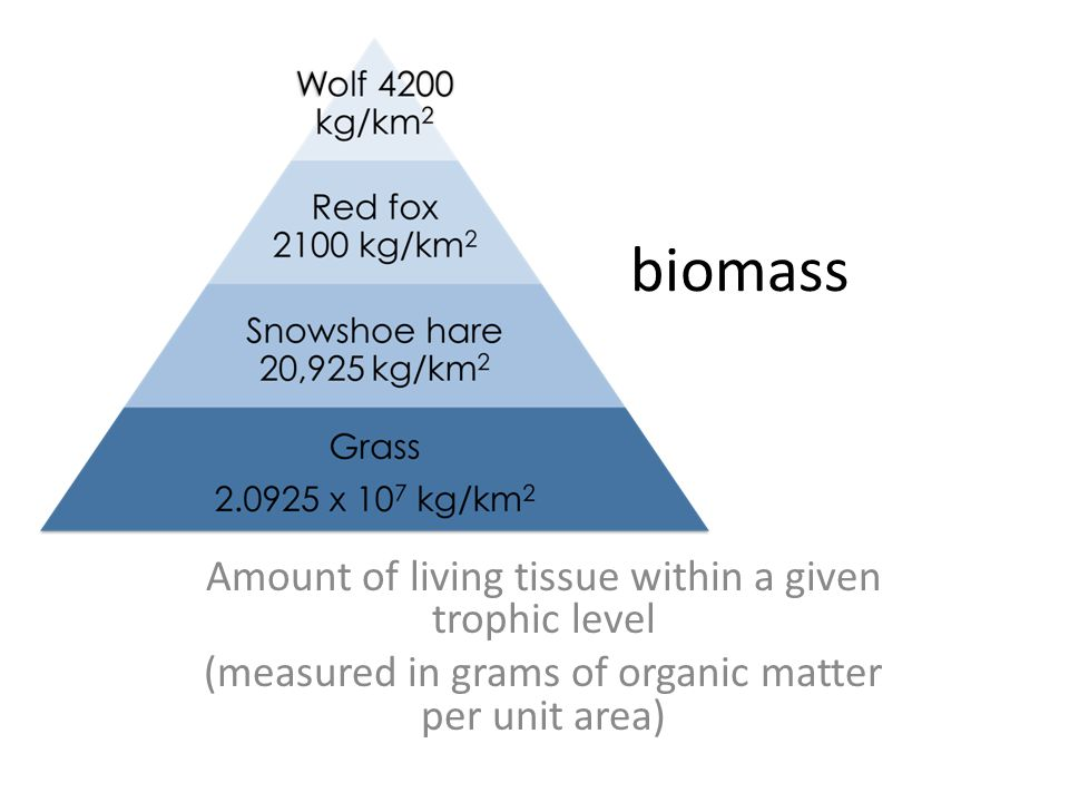 biomass Amount of living tissue within a given trophic level