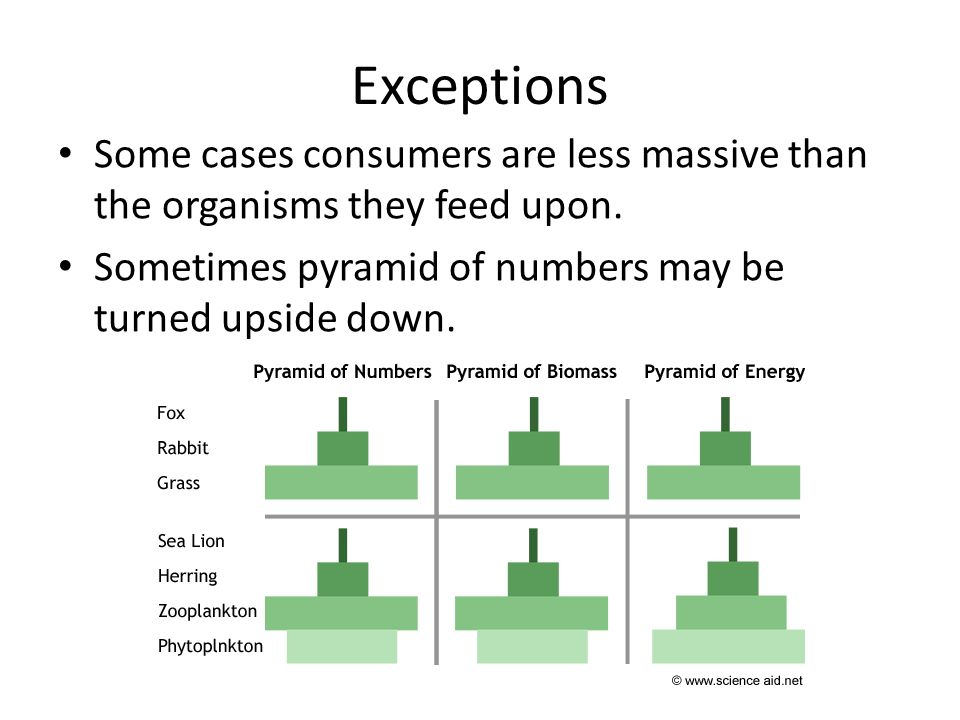 Exceptions Some cases consumers are less massive than the organisms they feed upon.