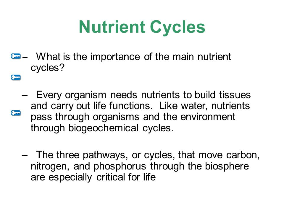 Nutrient Cycles What is the importance of the main nutrient cycles