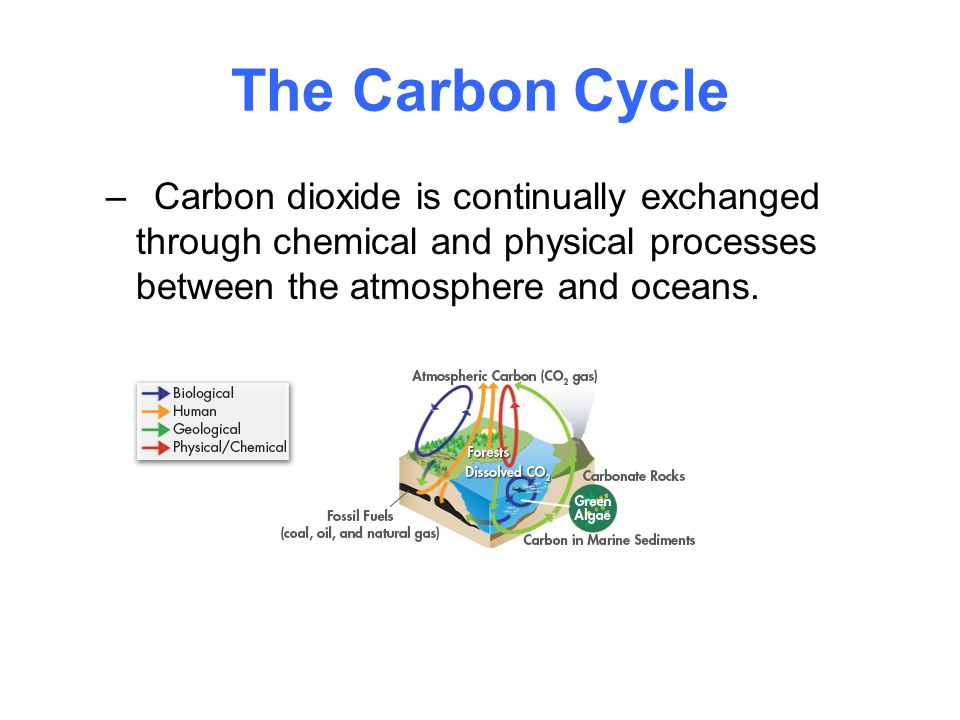 The Carbon Cycle Carbon dioxide is continually exchanged through chemical and physical processes between the atmosphere and oceans.