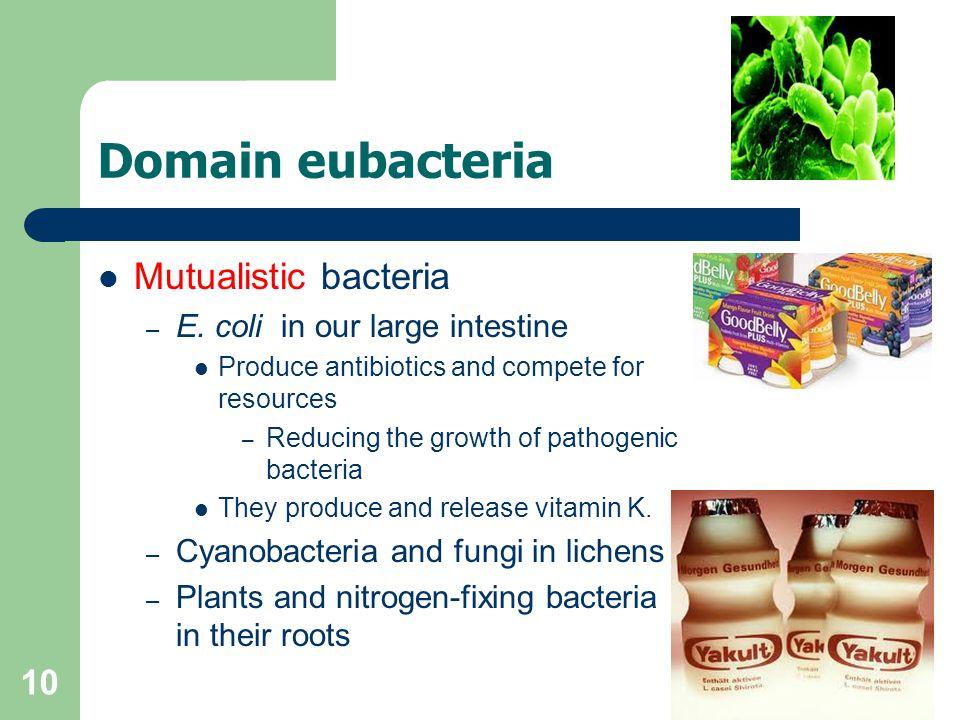 Domain eubacteria Mutualistic bacteria E. coli in our large intestine