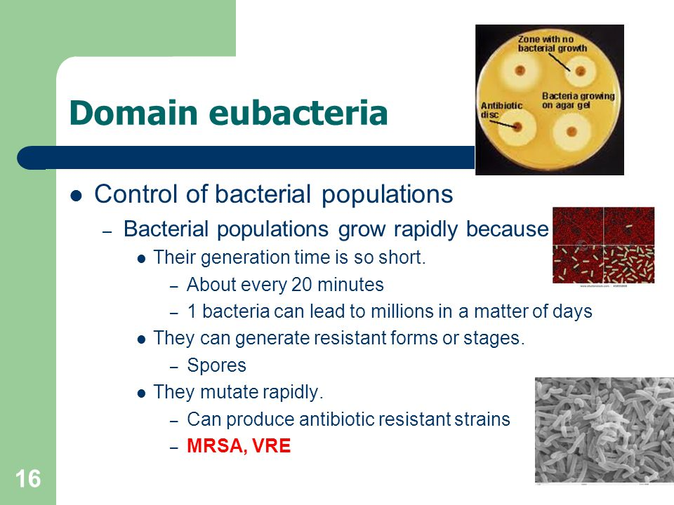 Domain eubacteria Control of bacterial populations