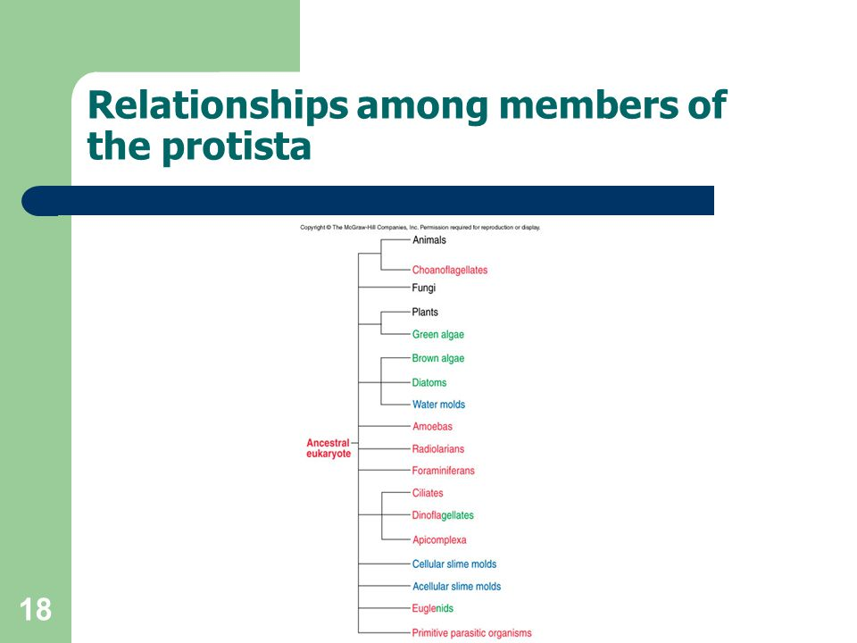 Relationships among members of the protista