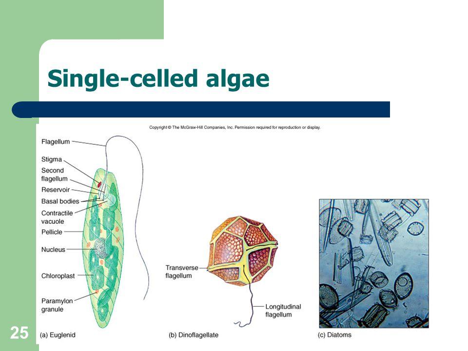 Single-celled algae