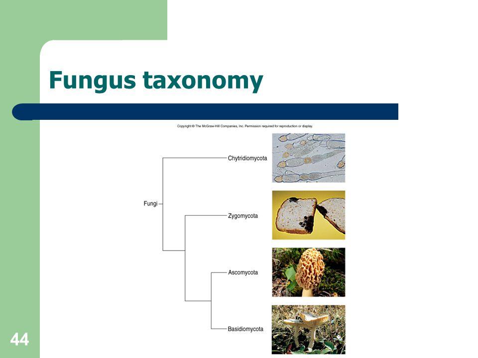 Fungus taxonomy