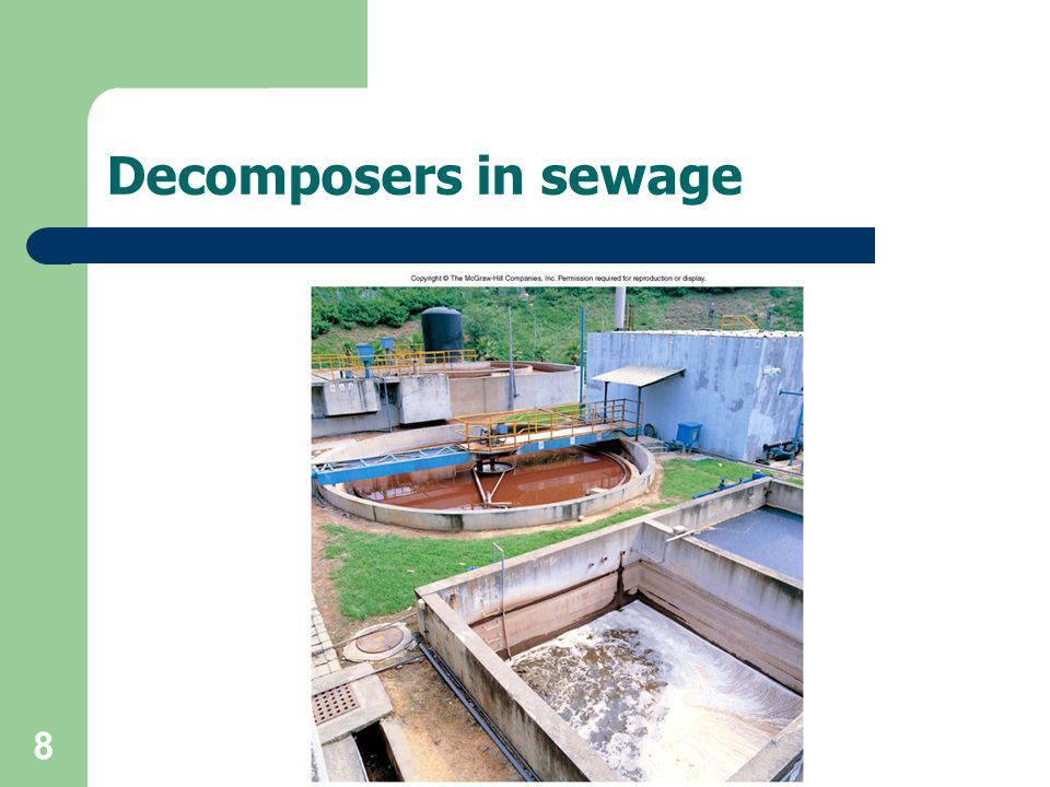 Decomposers in sewage