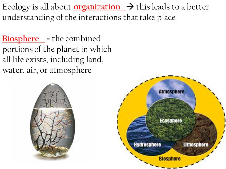 Ecology is all about ________________ this leads to a better understanding of the interactions that take place