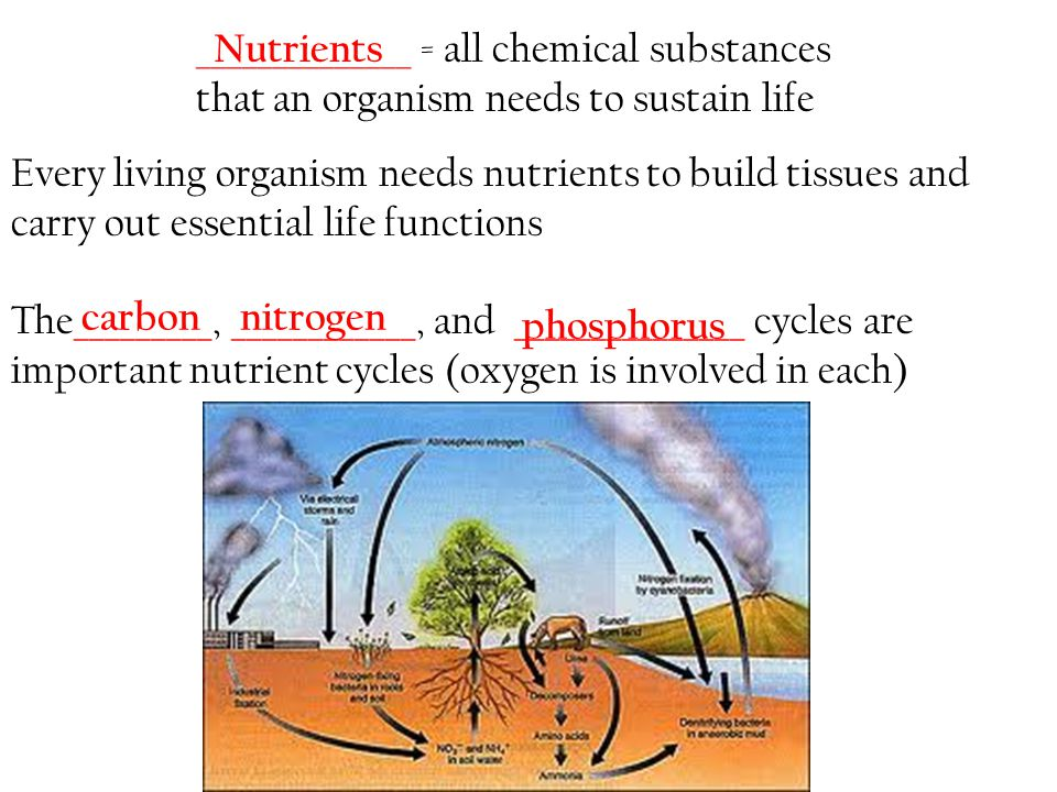 ______________ = all chemical substances that an organism needs to sustain life