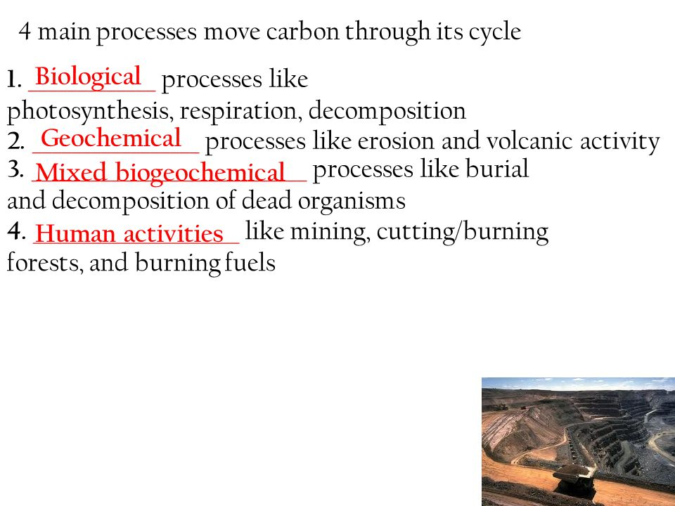 4 main processes move carbon through its cycle