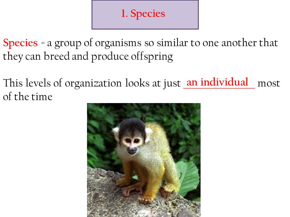 1. Species Species = a group of organisms so similar to one another that they can breed and produce offspring.