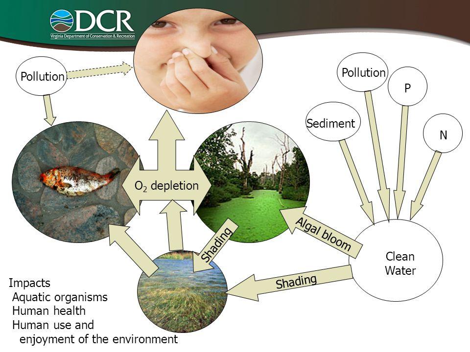 Pollution Pollution. P. O2 depletion. Sediment. N. Algal bloom. Shading. Clean. Water. Shading.
