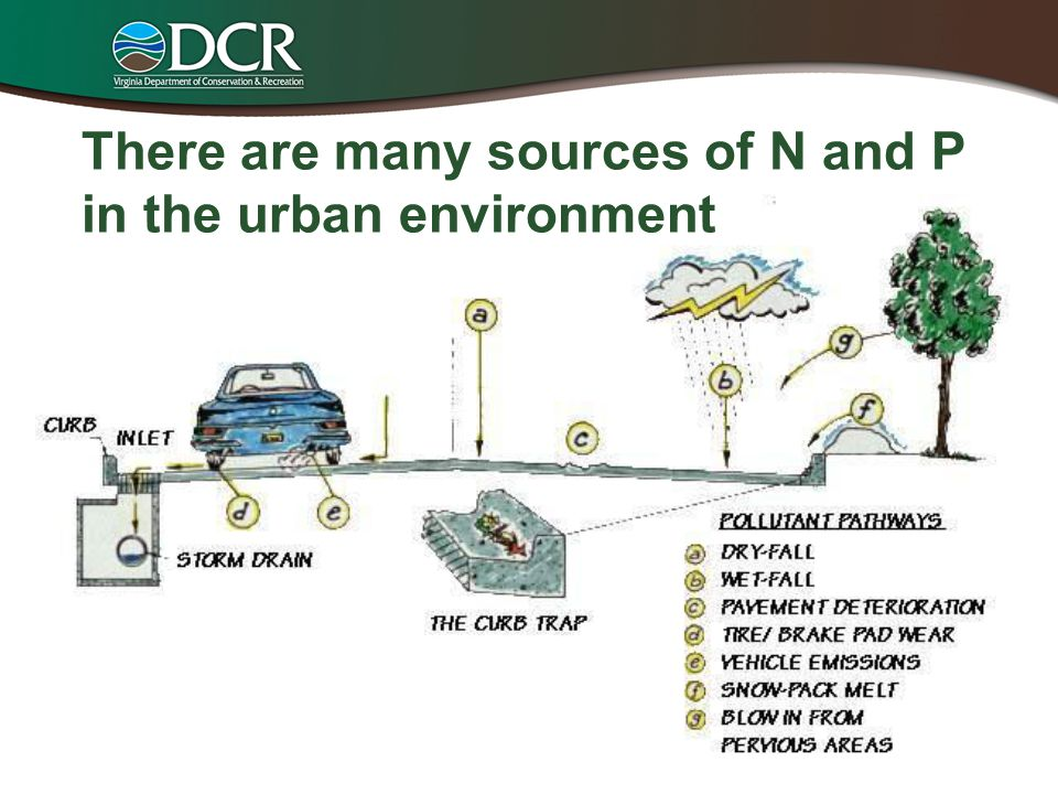 There are many sources of N and P in the urban environment