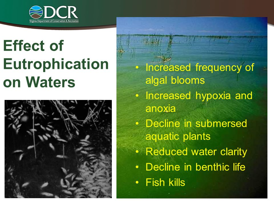 Effect of Eutrophication on Waters