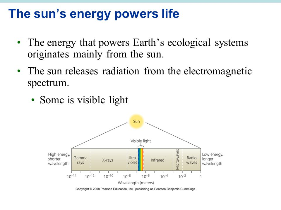The sun's energy powers life