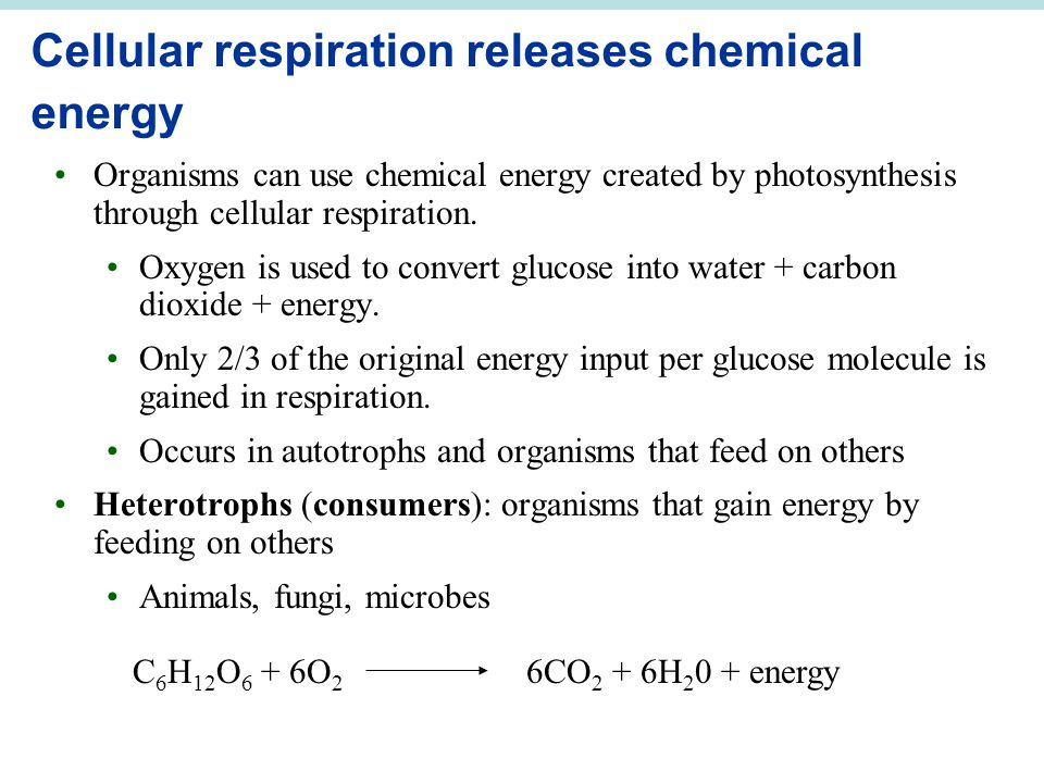 Cellular respiration releases chemical energy