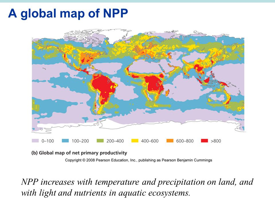 A global map of NPP NPP increases with temperature and precipitation on land, and with light and nutrients in aquatic ecosystems.