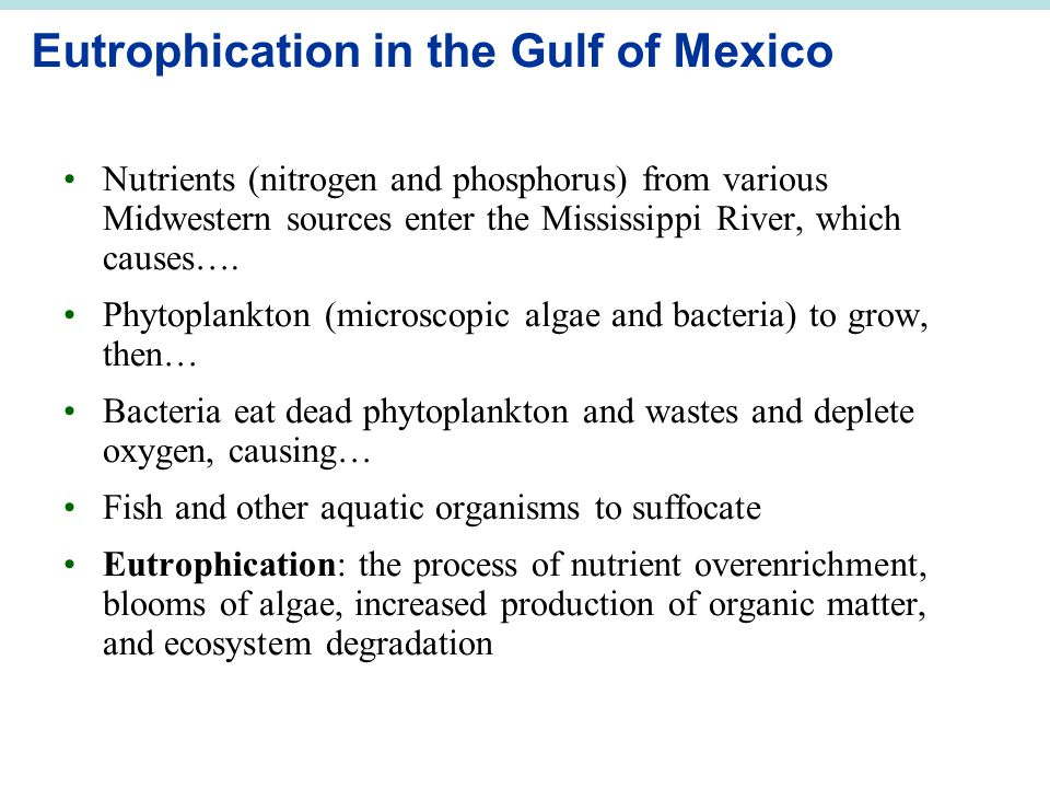 Eutrophication in the Gulf of Mexico