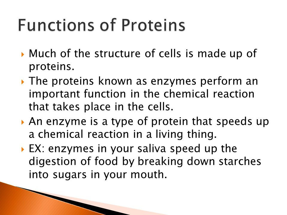 Functions of Proteins Much of the structure of cells is made up of proteins.