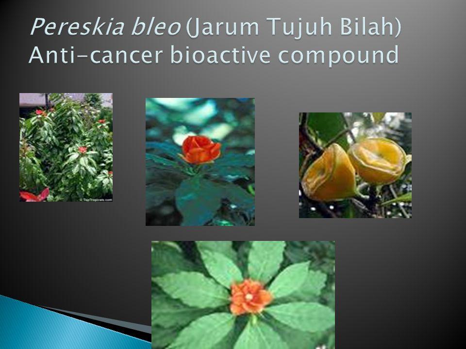 Pereskia bleo (Jarum Tujuh Bilah) Anti-cancer bioactive compound