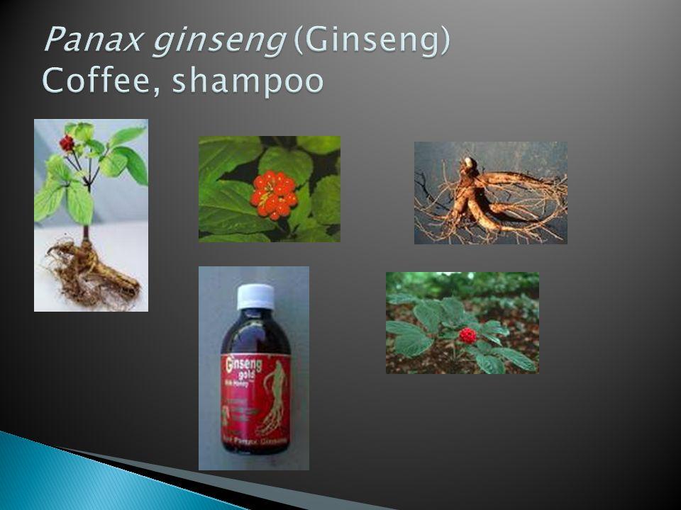 Panax ginseng (Ginseng) Coffee, shampoo