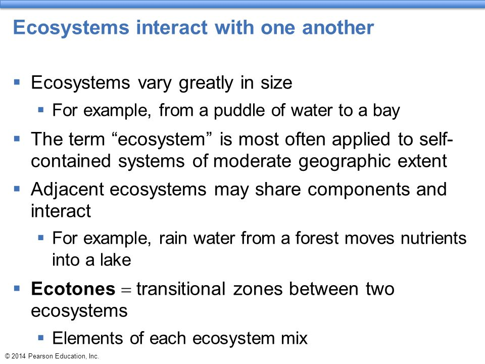 Ecosystems interact with one another