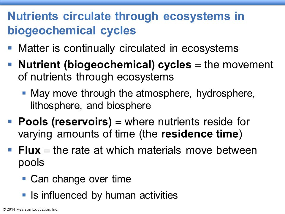 Nutrients circulate through ecosystems in biogeochemical cycles