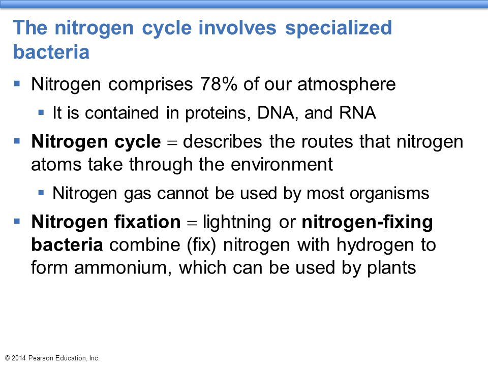 The nitrogen cycle involves specialized bacteria