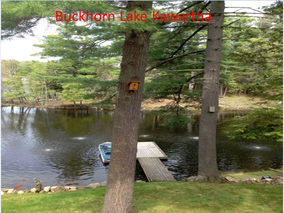 Buckhorn Lake Kawartha