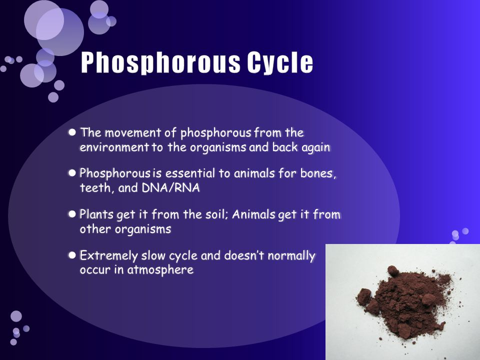 Phosphorous Cycle The movement of phosphorous from the environment to the organisms and back again.