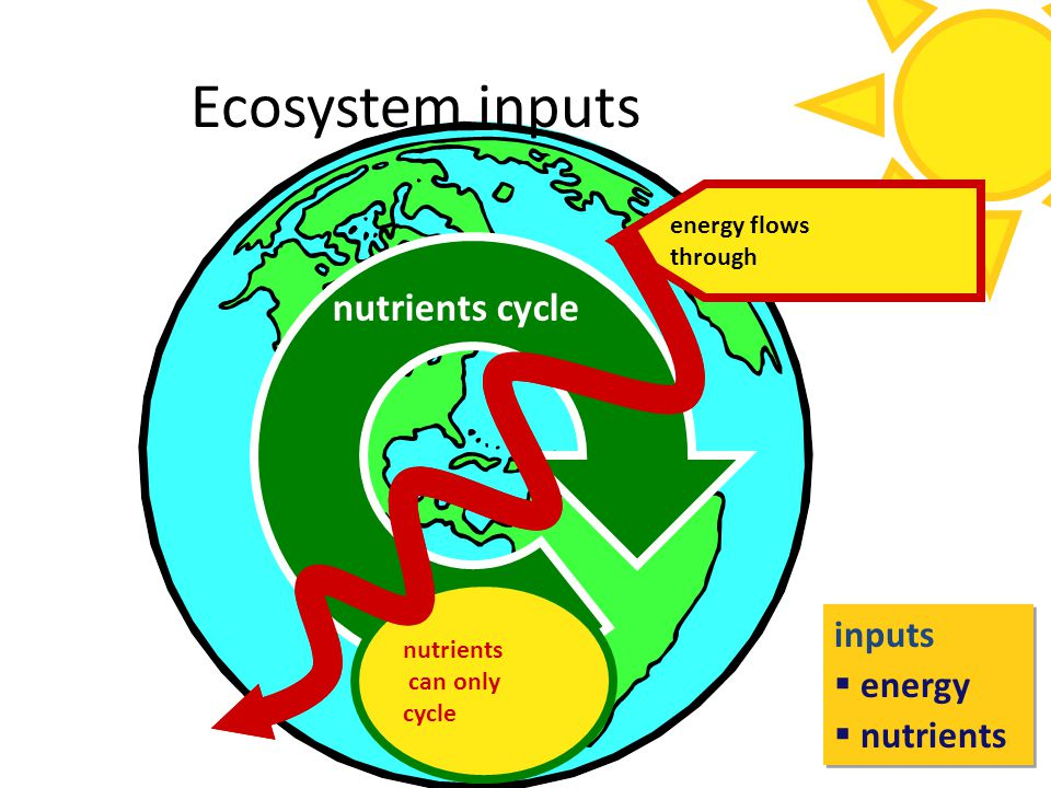 Ecosystem inputs nutrients cycle inputs energy nutrients biosphere