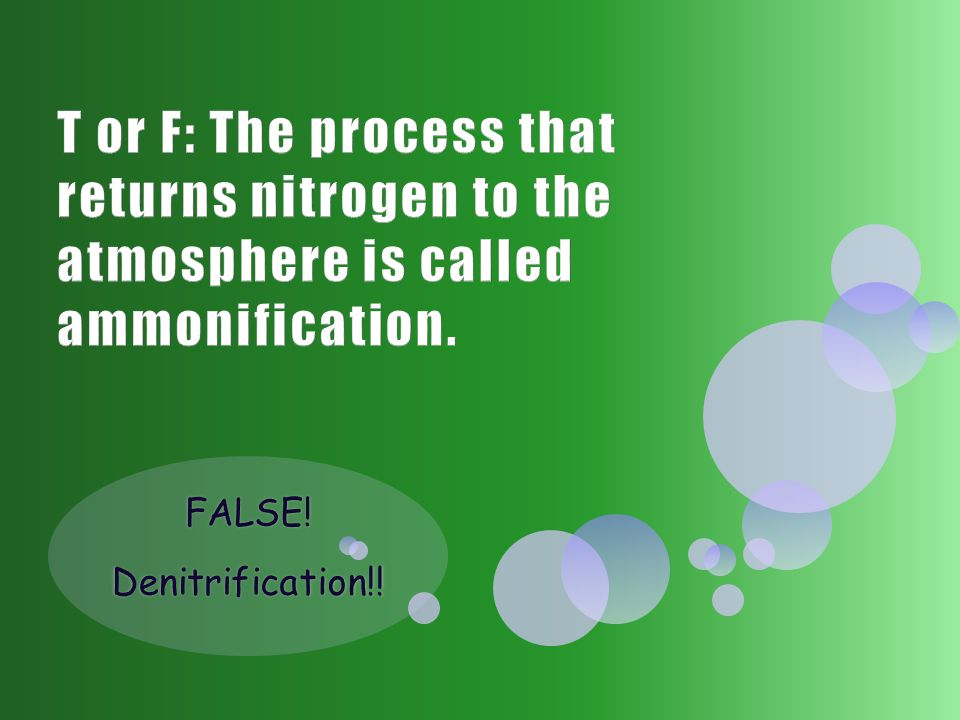 T or F: The process that returns nitrogen to the atmosphere is called ammonification.