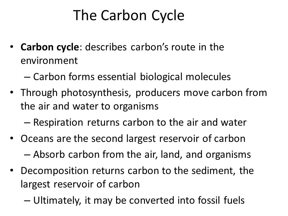 The Carbon Cycle Carbon cycle: describes carbon's route in the environment. Carbon forms essential biological molecules.