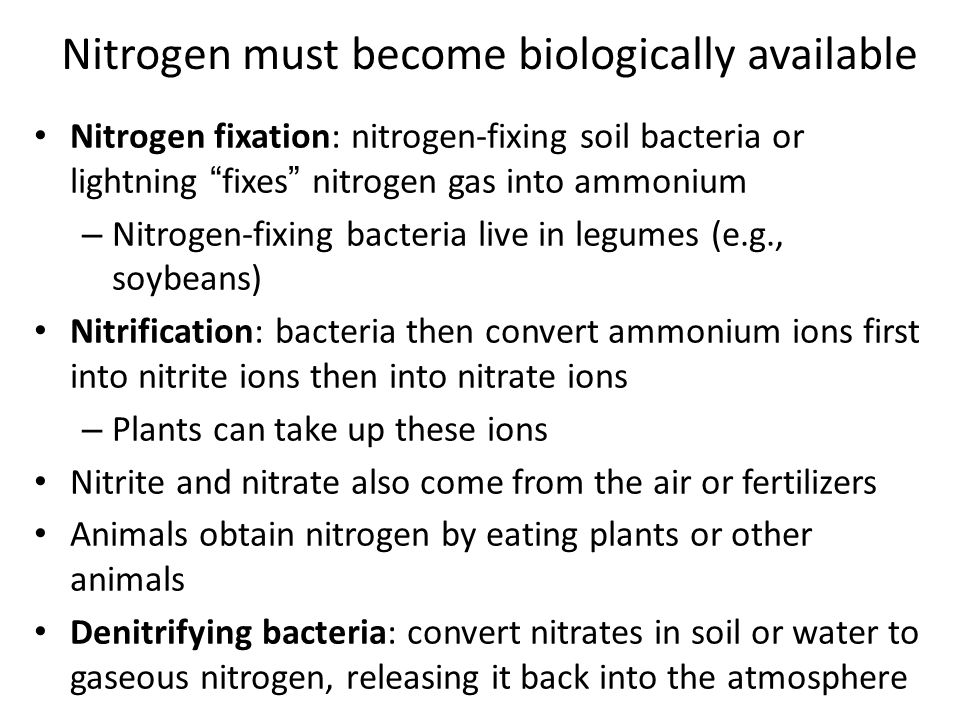 Nitrogen must become biologically available
