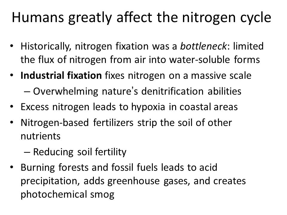 Humans greatly affect the nitrogen cycle
