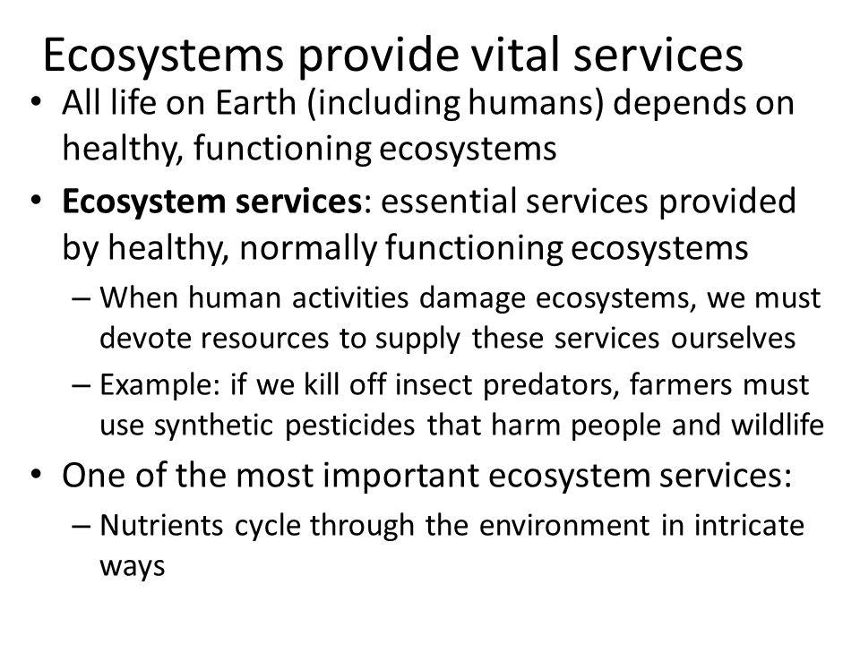 Ecosystems provide vital services