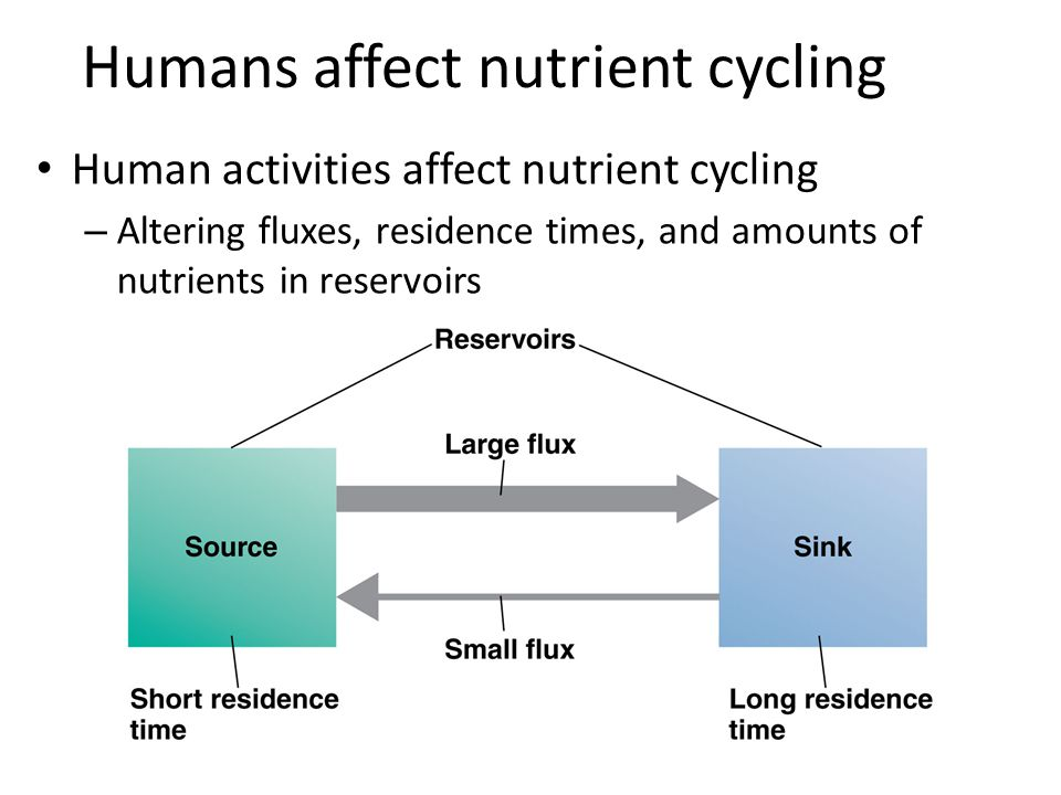 Humans affect nutrient cycling