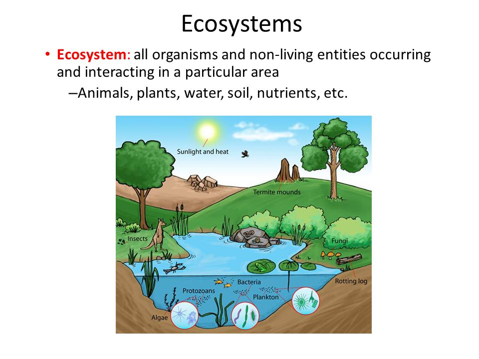 Ecosystems Ecosystem: all organisms and non-living entities occurring and interacting in a particular area.