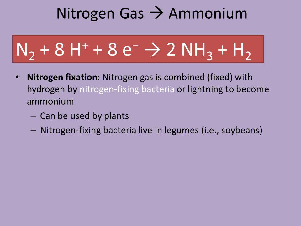 Nitrogen Gas  Ammonium