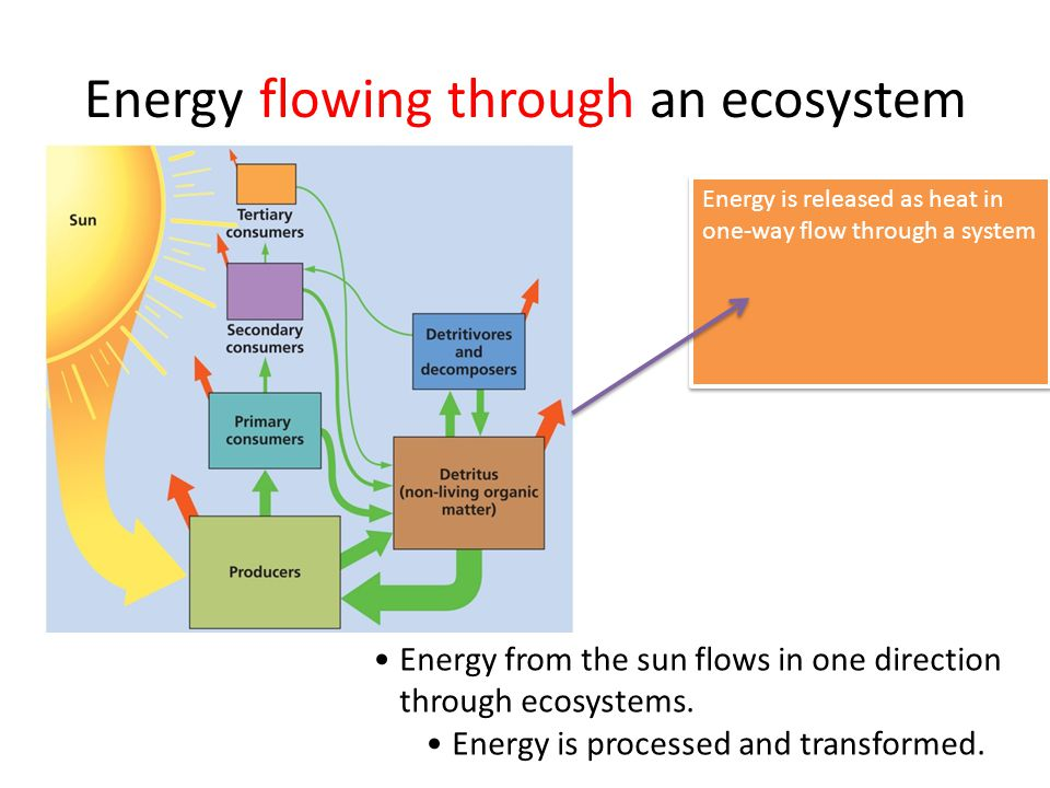 Energy flowing through an ecosystem